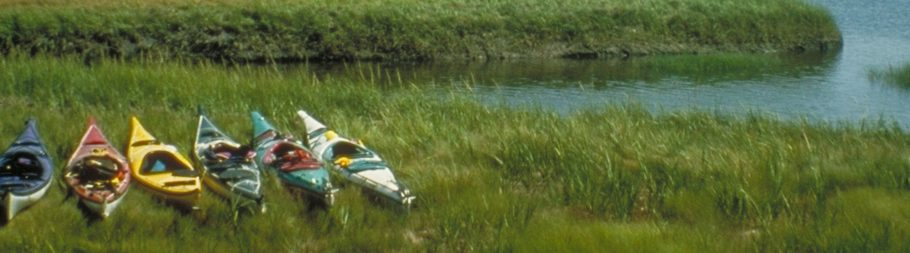 Kayaks in marsh grass