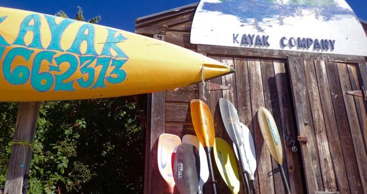 Maine Island Kayak Co paddle display