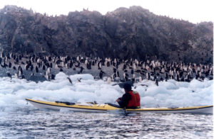 kayaking Antarctica past icebergs and penguins